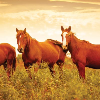 Read more about the article Equine Services